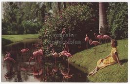 WOMAN WATCHING FLAMINGOS ~SARASOTA JUNGLE GARDENS FLORIDA ~ c1960s postc... - $3.63