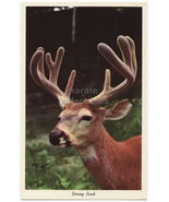 Greetings from ALLEGAN MICHIGAN~YOUNG BUCK DEER  c1960s -FOREST ANIMALS ... - $2.71