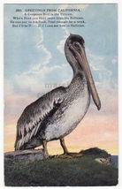 GREETINGS FROM CALIFORNIA - BROWN PELICAN BIRD - 1910s postcard - $2.71