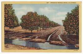 SOUTHERN CALIFONIA ~ IRRIGATED ORANGE GROVE ~ FARMING SCENE 1930s  postcard - $3.22