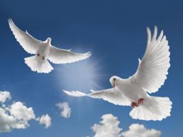 Handmade Dove's Blood Ink. For love romance friendship peace spiritual g... - $19.99