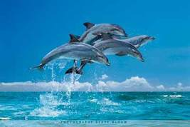 Four Dolphins Nature Poster - $5.90