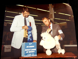 Poodle Dog Show Winners Picture 1983 Color 8 X 10 Joey Quebec  - $29.99