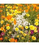 Wildflower Gulf Coast Mix Seeds (7g+Seeds) - $23.92