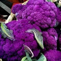 1 oz Packets of Violetta Italia Cauliflower Plants - $34.16