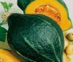 Squash Winter Green Hubbard Non GMO Heirloom Vegetable Seeds Sow No GMO® USA - $3.65+