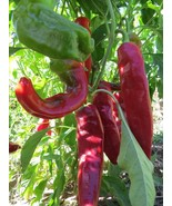 Velarde Chile - a traditional chile from Northern New Mexico - $4.50