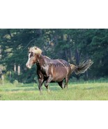 Chincoteague Stallion Riptide Photo - Various Sizes - $7.50+