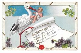 Birth Announcement Stork with Baby Shamrocks Violets Vintage Postcard 1912 - $4.99