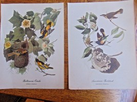 "Vintage Two Prints Baltimore Oriole  & American Redstart Very Old 9"" X 12"" - $12.99"