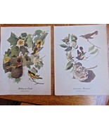 """Vintage Two Prints Baltimore Oriole  & American Redstart Very Old 9"""" X 12"""" - $1.97"""