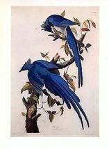 """1970's John James Audubon's """"Columbia Jays"""" - $2.92"""