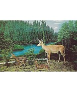 1960's Doe and Fawn Deer Display, Call of the Wild Museum, Gaylord, Mich... - $5.89