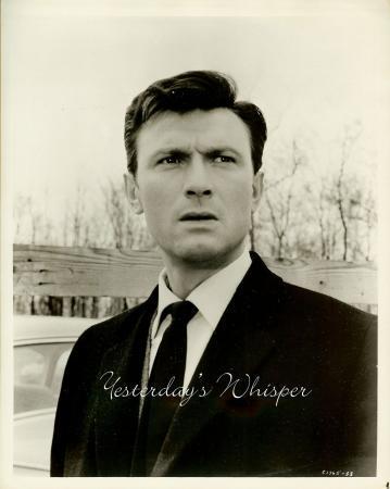Laurence Harvey Butterfield 8 Original Portrait Photo