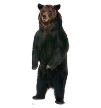 Brown Bear Life Size Cardboard Standup Cutout Express Shipping New Licensed 1488 - $39.95