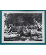 BISONS Buffaloes Fight to Death Winter Forest - Victorian Era Print 15.5... - $25.20