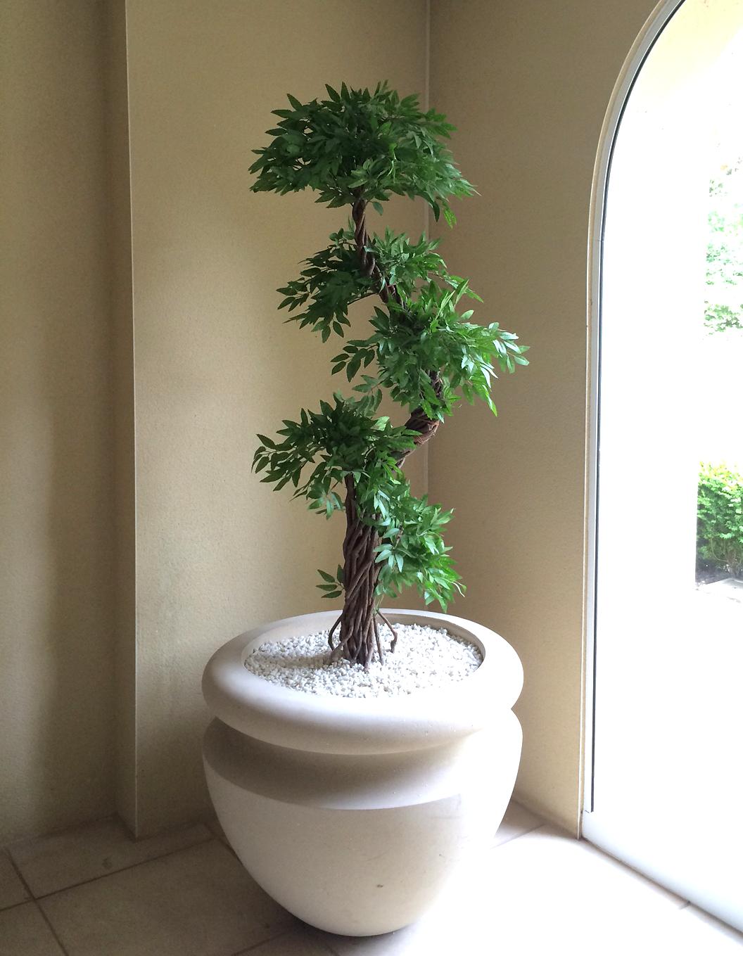 Wallpapers Unlimited: Beautiful Japanese Bonsai Trees |Beautiful Japanese Trees