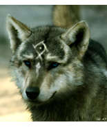 Real wolf link wolves 22974348 932 1024 thumbtall