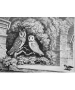 AESOP FABLES Birds Owls & Sparrow - 1811 Original Etching Print - $22.49