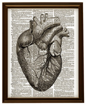 Human Heart Anatomical Black and White Dictiona... - $12.00