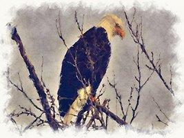 Eagle Poster Animal Poster Eagle Art Animal Art Eagle Print 18X24 (EAGLE3) - $19.99