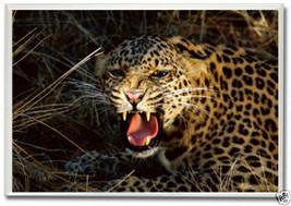Cheetah, Animal ~ 2 x 3 Photo Souvenir Fridge Magnet A056 - $5.99