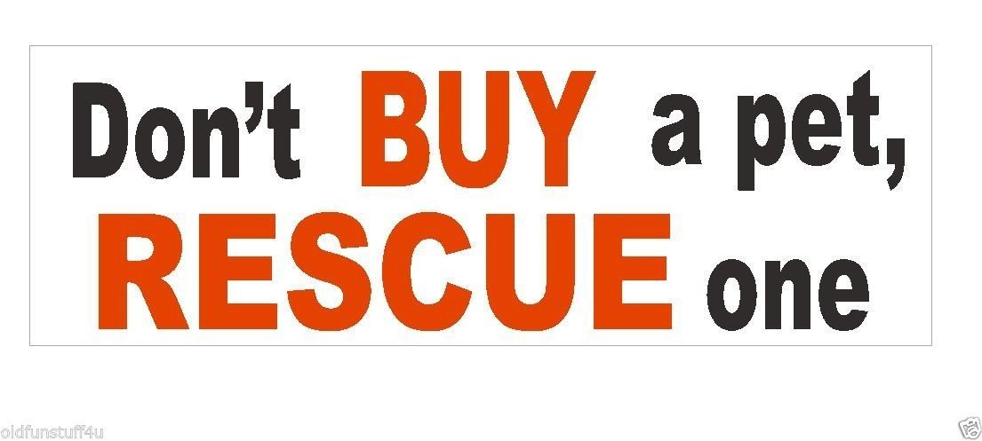 Primary image for Don't Buy A Pet Rescue One Bumper Sticker or Helmet Sticker D376 Dog CAT Snake
