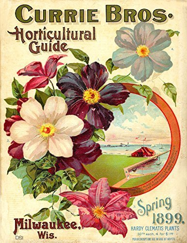 Primary image for Vintage Seed Co. Reproduction Print 11 x 17 Currie Bros.