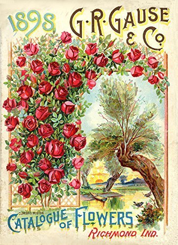 Primary image for Vintage Seed Co. Reproduction Print 11 x 17 GR Gause 1898