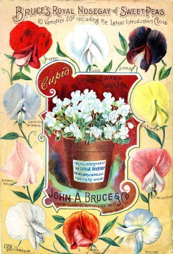 Primary image for Vintage Seed Co. Reproduction Print 11 x 17 Bruce Seed Co,
