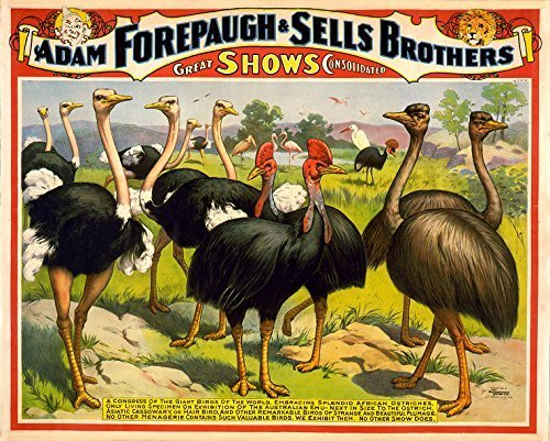 Primary image for Vintage Reproduction Print Circus Forepaugh and Sells Bros. 1898s Ostriches