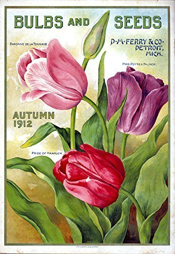Primary image for Vintage Seed Co. Reproduction Print 11 x 17 Ferry Bulb & Seed #8