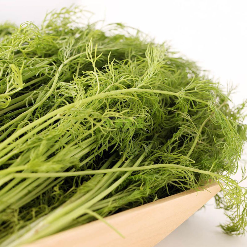 Primary image for Fennel Seeds, Helathy Vegetables Seeds Herb - 120 pcs/package