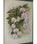 Lindenia Limited Edition Print Phalaenopsis Lowii Rchb Orchid Collectibl... - $15.19