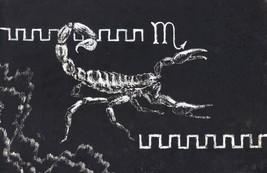 "Akimova: SKORPION, animal,nature, scratch paper, black and white, 5.5""x8.5"" - $10.00"