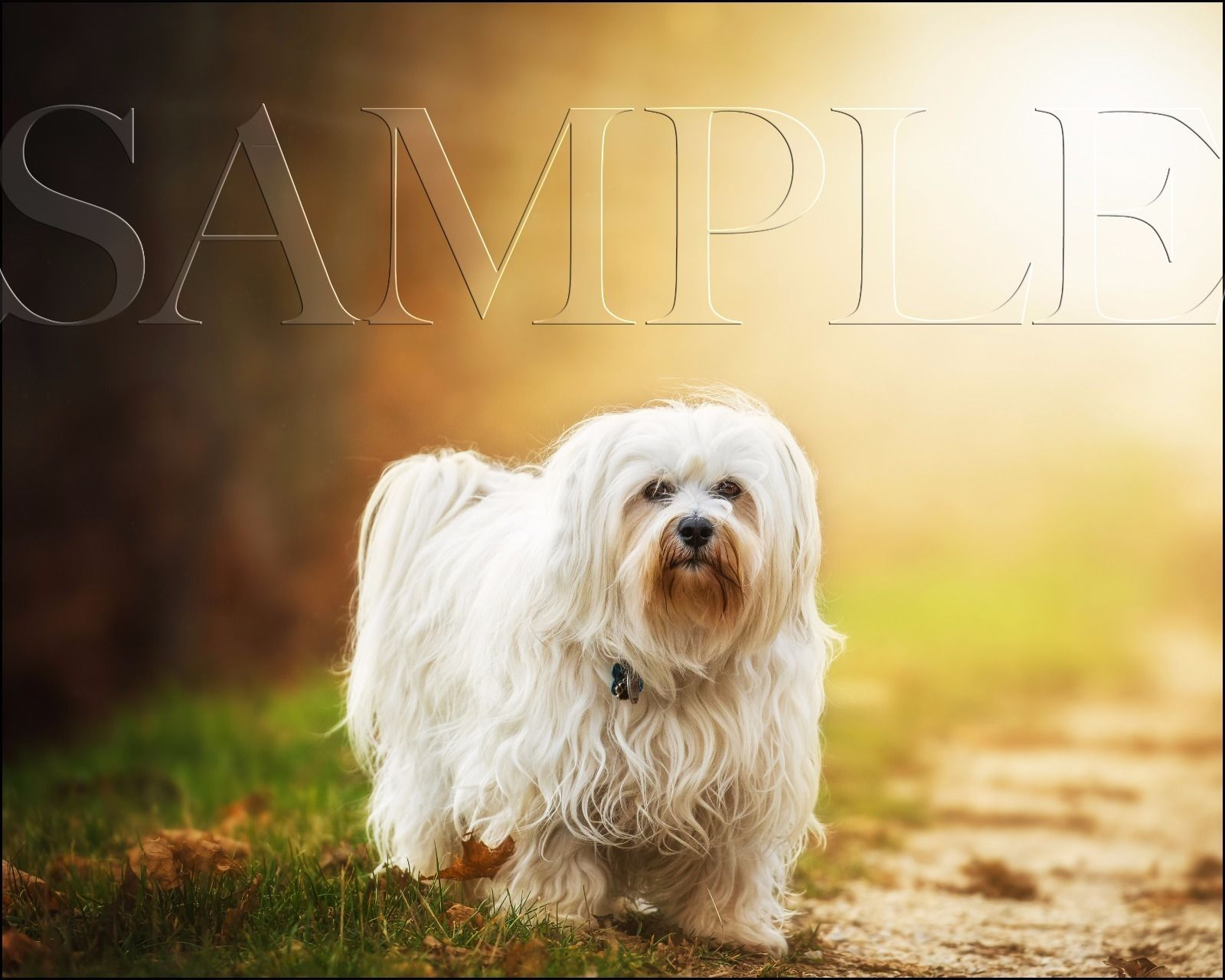 Primary image for Dog Photograph 8X10 New Fine Art Color Print Picture Photo Animal Dogs Nature