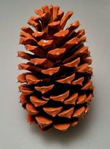 12 Pumpkin Orange Pine Cones Hand Painted All Natural Premium Quality Co... - $13.64
