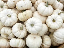 Pumpkin Seeds - Baby Boo (Treated) - Gardening -  Outdoor Living - FREE SHIPPING - $46.99+
