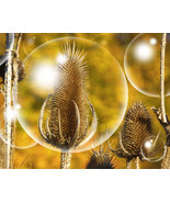Bubbles Wall Art Matted Picture Photo Print Home Decor Livingroom Bedroom - $22.00