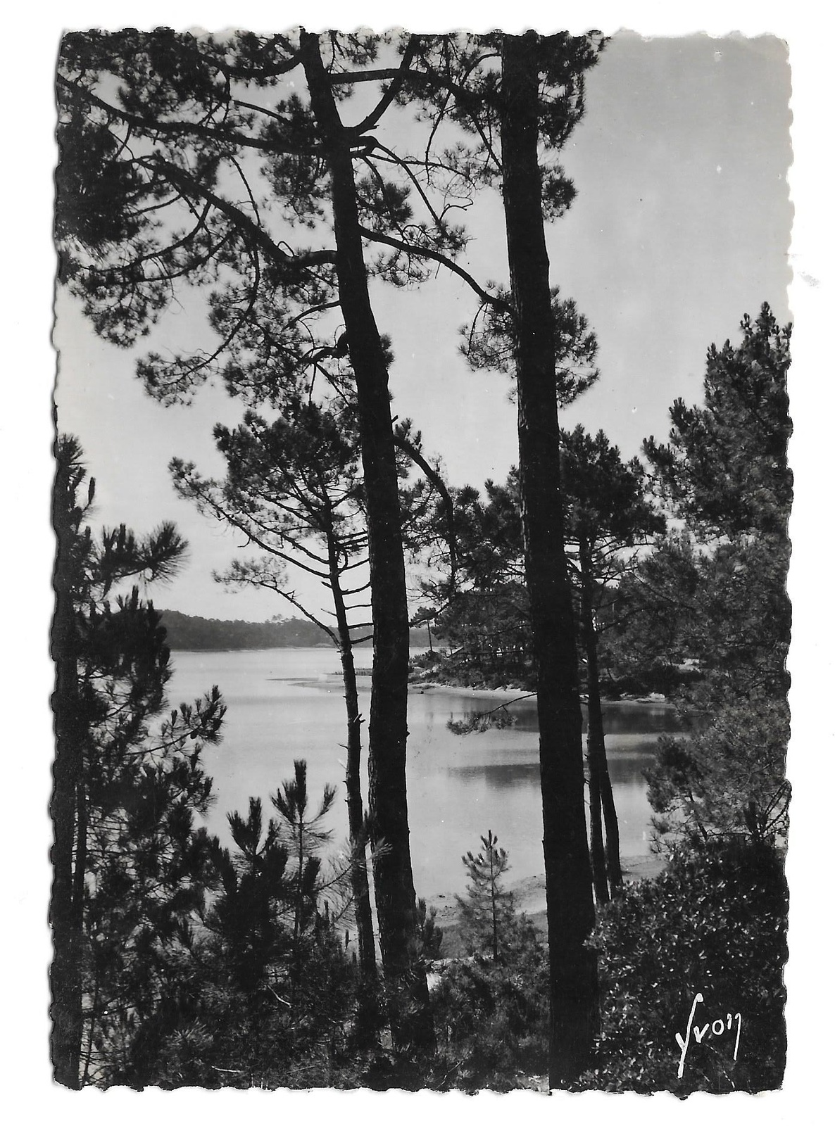 France Lac Marin Hossegor Landes View Thru Pines Glossy YVON Photo Postcard 4X6