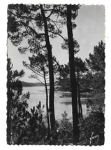 France Lac Marin Hossegor Landes View Thru Pines Glossy YVON Photo Postc... - $4.99