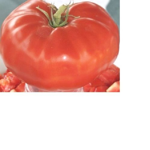 SHIPPED From US,PREMIUM SEED: 50 Particles of Tomato Seeds, Fresh Hand-Packaged