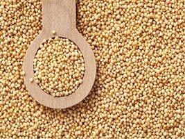 Organic Amaranth SEEDS- 24.948lb - $132.68