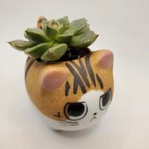 "Graptoveria Olivia Succulent in Cat Planter - 2.5"" Kitty Kitten Ceramic Pot image 3"