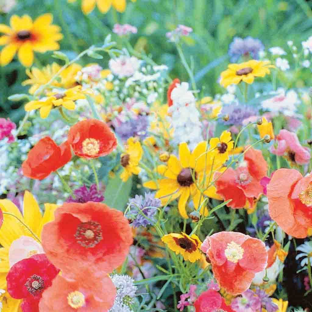 Primary image for WILDFLOWER mix for birds and butterflies, cut flowers 10 grams of seeds