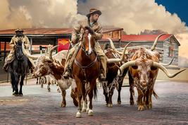 Fort Worth Texas Longhorns, Fine Art Photos, Paper, Metal, Canvas Prints - $40.00
