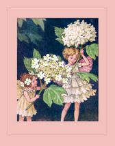 The Guelder Rose Tree Fairies Art by Cicely Mary Barker Original Early 1940s Edi - $14.90