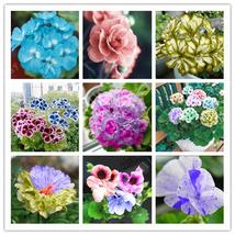 20pcs/bag 9 Species Mix Colorful Geranium Seeds Flowers Bonsai Plants - $4.08