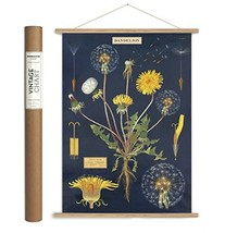 Cavallini Papers & Co. Cavallini Vintage Dandelion Hanging Poster Kit Multi - $48.99