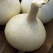 100 Seeds of NuMex Casper Onions - $16.83
